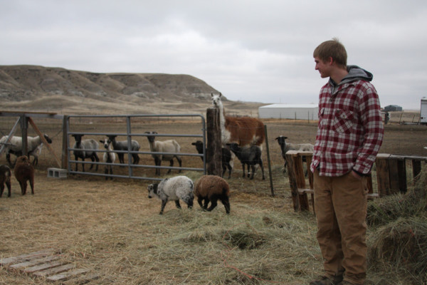 Senior Josh Pecukonis observes his flock on his farm north of Great Falls.