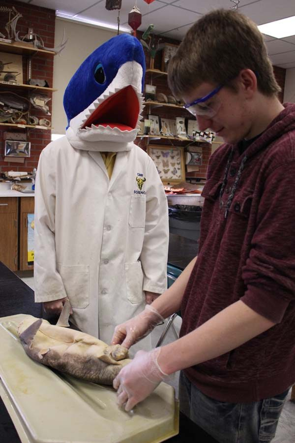 Biology+teacher+Nathan+Gregier+wanders+his+classroom+in+a+shark+mask+once+each+year+as+his+students+dissect+the+creatures.