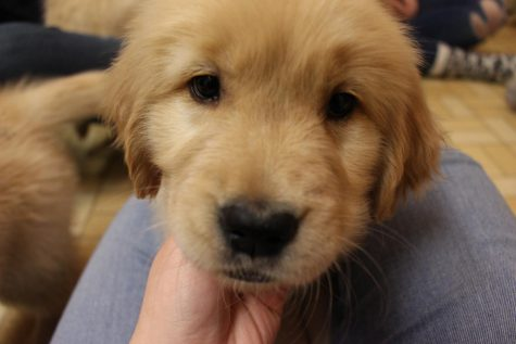Puppy Therapy - January 17