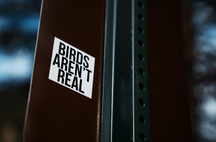 Birds Aren't Real movement points to real-world problems